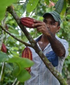 cacao-colombie